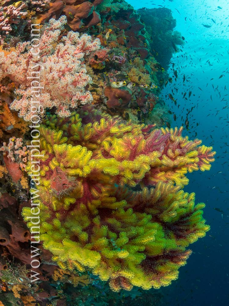 Reef scene in RAJA AMPAT #00002 web