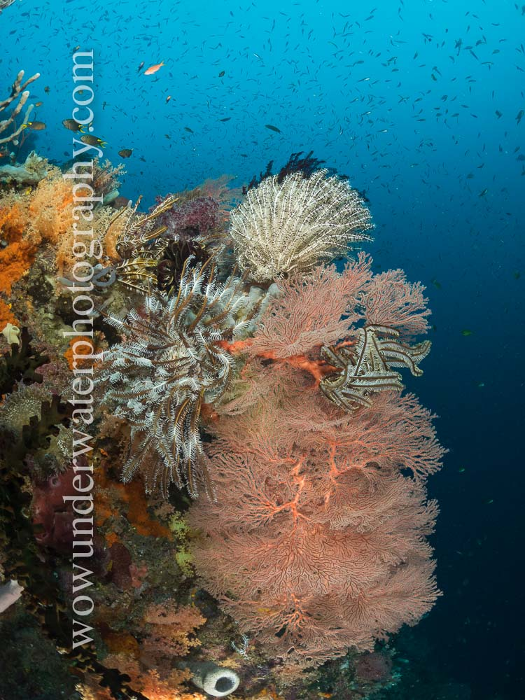 Reef scene in RAJA AMPAT #00003 web