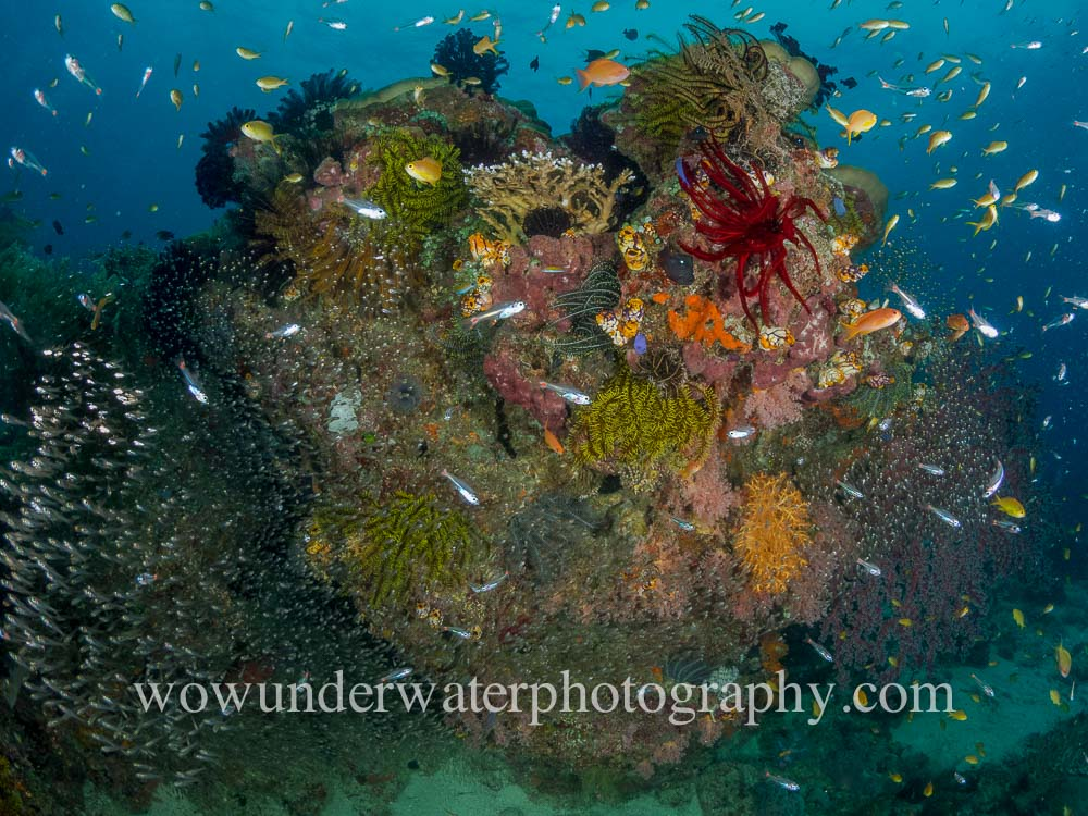 Busy reef scene RAJA AMPAT #00004 wow web