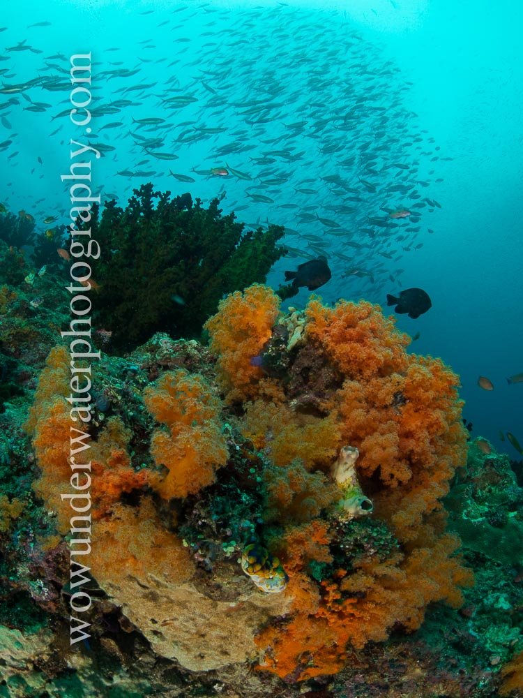 Reef scene in RAJA AMPAT #00006 web