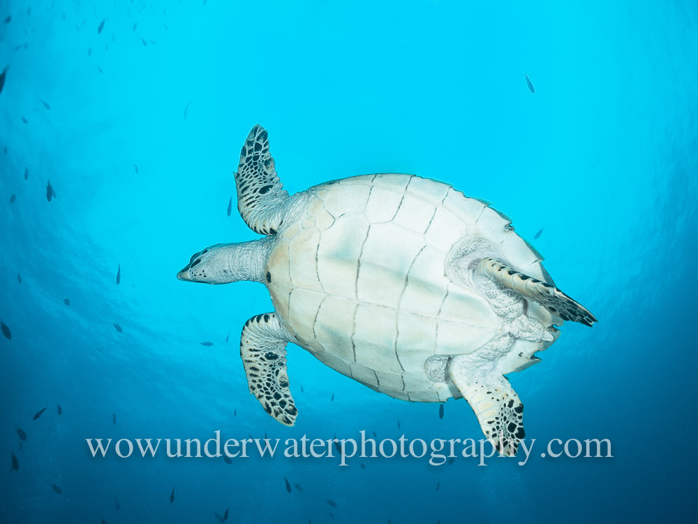 TURTLE in the blue #00002 bestsellers web