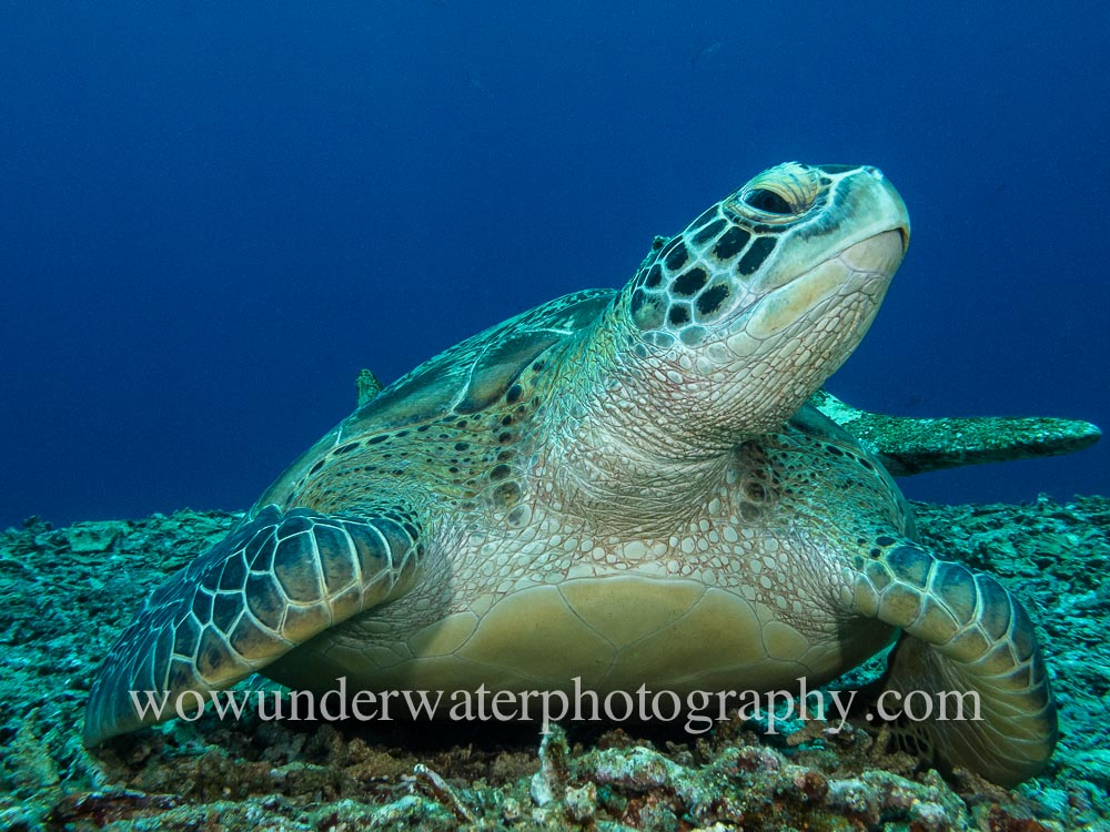 TURTLE at Gili Air #00112 web
